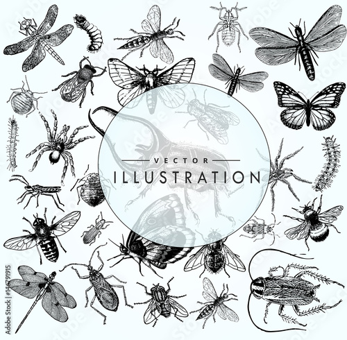 Fotografia, Obraz large set of sketches of insects