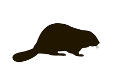 Silhouette Of A Sitting Beaver