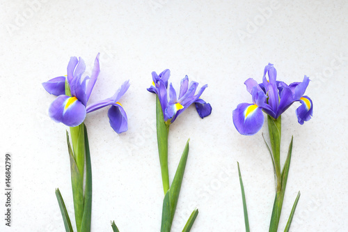Spoed Foto op Canvas Iris Three iris on a light background