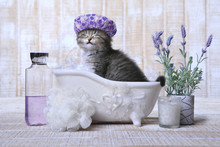 Adorable Kitten In A Bathtub R...