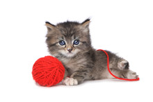 Playful Kitten With Red Ball O...