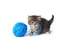 Kitten With Ball Of Yarn In St...