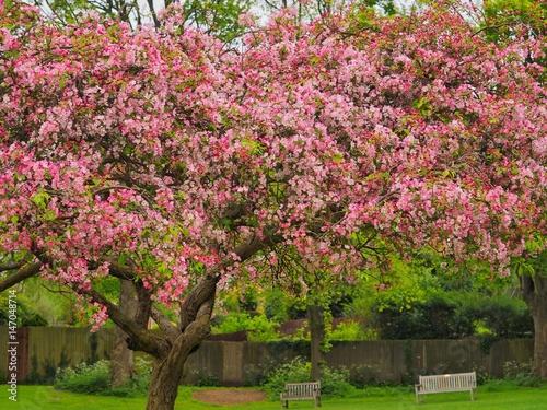 Tuinposter Azalea Blossom