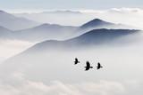 Sylwetki gór we mgle i ptak latający - 147084747