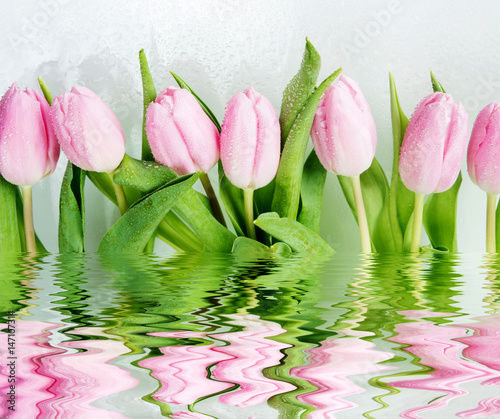 Pink tulips flowers reflected in a water
