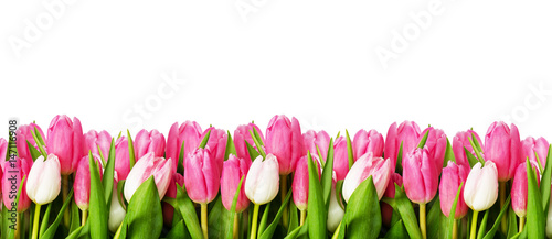 Photo  Pink tulip flowers border