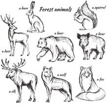 Set Of Sketch Illustration