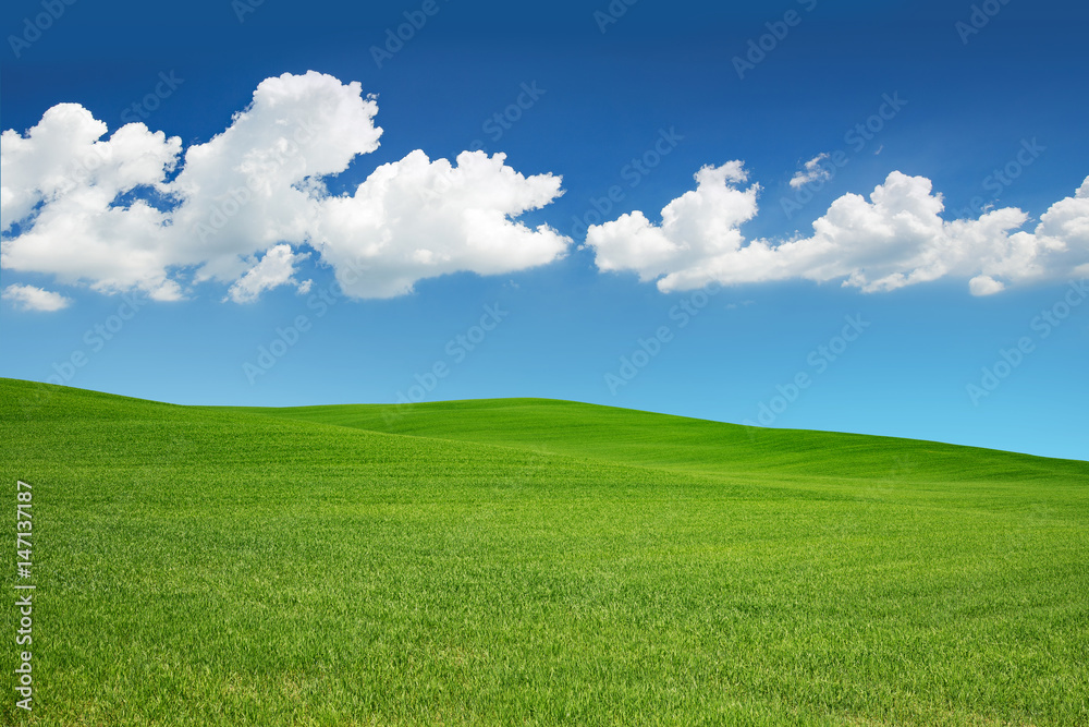 Fototapety, obrazy: green meadow under a spring sky with white clouds.