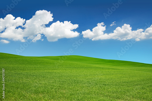 Poster de jardin Colline green meadow under a spring sky with white clouds.