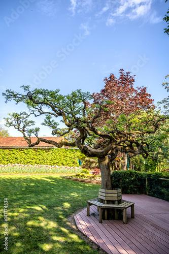 Grand Bonsai, jardin de Martel, Tarn, Midi-Pyrénées, France
