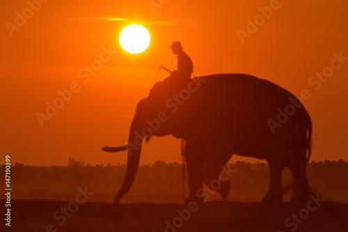 Foto auf Leinwand Ziegel Big sun in sunrise,Sun and elephant on during sunrise focus on Sun,Sun on during sunrise,White balance orange on sunrise