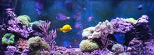 Reef Tank, Marine Aquarium. Bl...