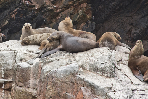 Photo  Perfect place to see a lot of birds,  sea lions and other mammals on the rocky islands