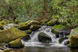 Smoky Mountains National Park Mossy creek cascade