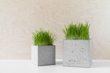 Concrete Pots With Grass For Interior