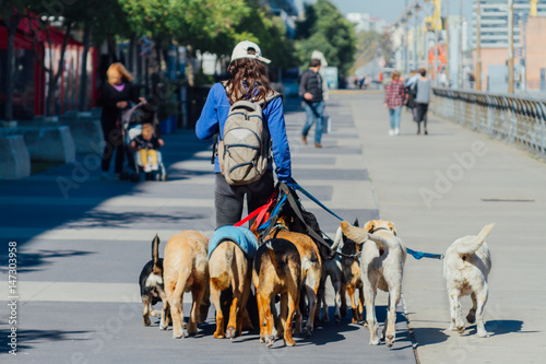 Photo  Young woman seen from behind walking dogs