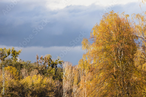 Foto op Canvas Herfst The light from the setting sun falls on the trees with yellow foliage. Autumn landscape