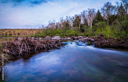 Water flows gently through a broken beaver dam at dusk Canvas Print