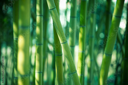 Foto auf AluDibond Bambus Bamboo forest background