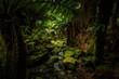 A Walk through a Fern Glade