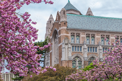 La pose en embrasure Fleur de cerisier Cherry blossom trees at University of Washington