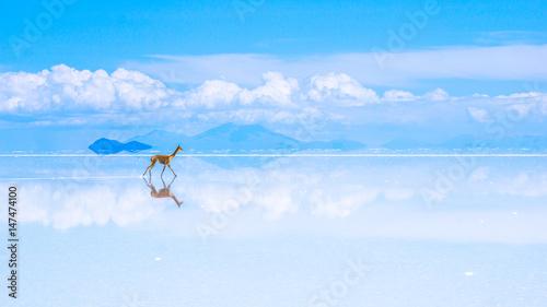 Poster Lama cloud walker