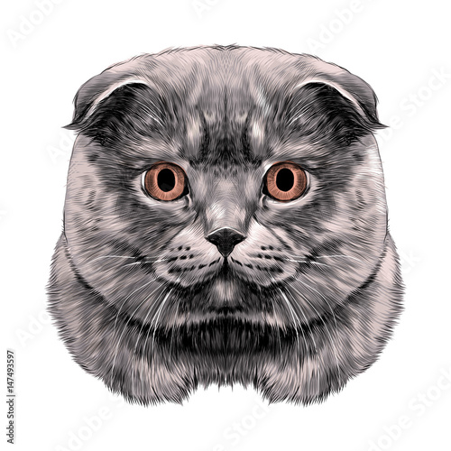 Photo sur Toile Croquis dessinés à la main des animaux cat breed British lop-eared head thick symmetrical sketch vector graphics color picture