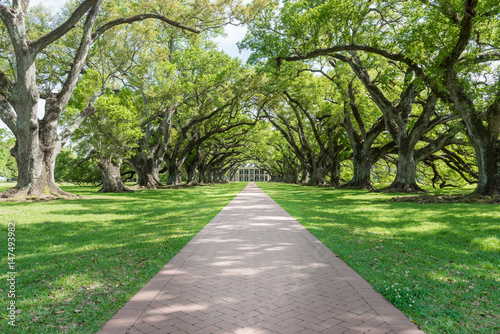 vacherie-louisiana-april-09-2016-oak-alley-plantation-park