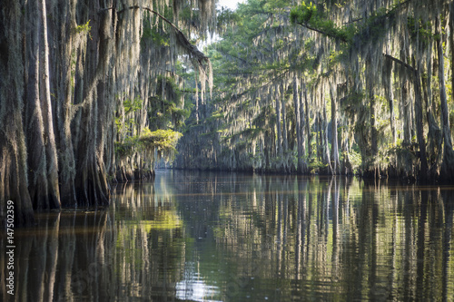 Fototapeta Still misty morning view of the scenic waters of Caddo Lake, the Texas - Louisia
