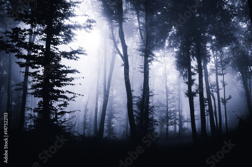 dark fantasy forest background buy this stock photo and explore
