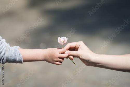 Fotografía  小さな花を手渡す親子