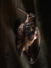 Dead Woodcock Bird