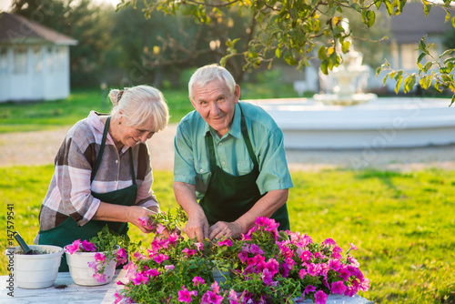 Keuken foto achterwand Begraafplaats Woman and man transplanting flowers. Smiling old couple outdoors. Turn hobby into a business.