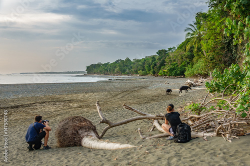Unidentified tourists admire tapir entering the forest in Corcovado Fototapet