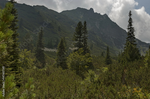 Fototapety, obrazy: Sunlit mountain top overgrown with coniferous forest and glade on the ecological walk toward Maliovitza peak in Rila mountain, Bulgaria