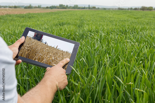 Using tablet on wheat field Canvas Print