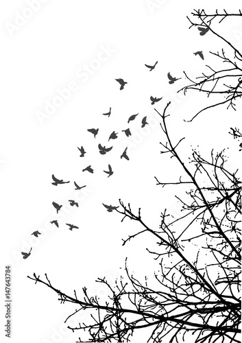 Photo sur Toile Oiseaux sur arbre illustration, silhouette of flying birds and tree branches, freedom