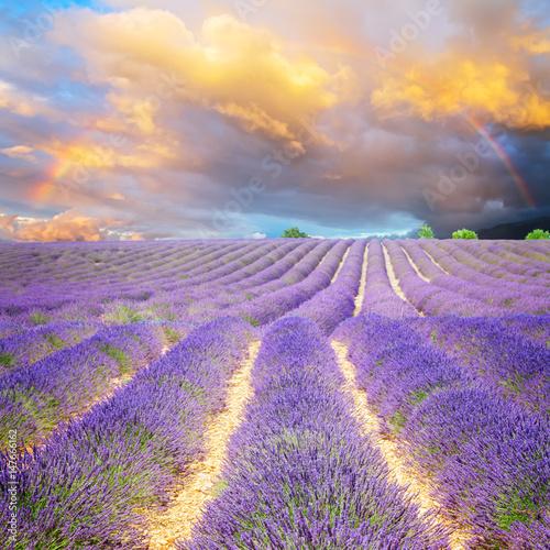 pole-pelne-kwiatow-lawendy-na-tle-pochmurnego-nieba-podczas-zachodu-slonca-prowancja