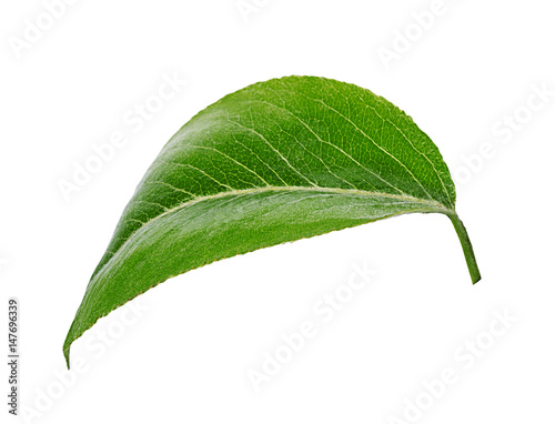 Pears leaves isolated on a white