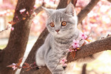 Fototapeta Cats - Cute cat on blossoming tree outdoors
