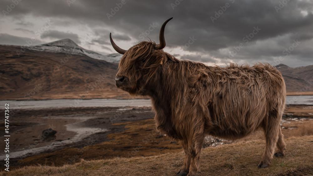 Fototapeta Scotland