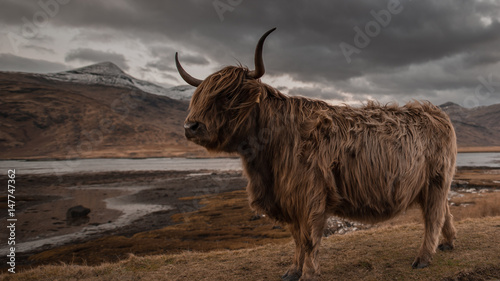 Fotografie, Obraz Scotland