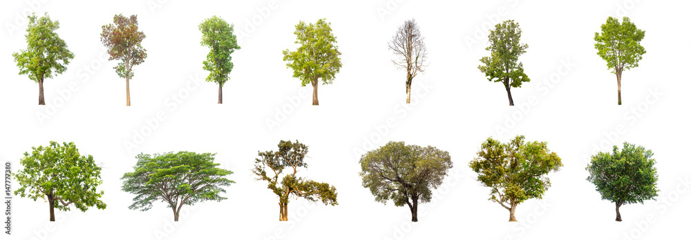 Fototapety, obrazy: collections green tree isolated. green tree  isolated on white background.