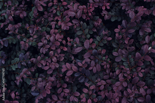 Real tropical leaves background, jungle foliage Fotobehang