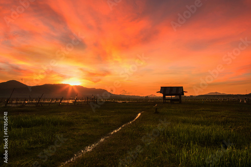 Fotobehang Koraal Landscape of dramatic sky in morning over lake and field