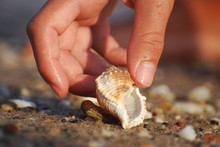 Woman Hand Taking Sea Shells From Sand On Beach. Collecting Seashells On The Beach, Summer Vacation At Sea