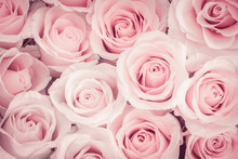 Close Up Of Pink Roses Background