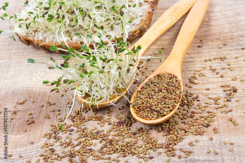 Fresh alfalfa sprouts and seeds - closeup. Canvas Print