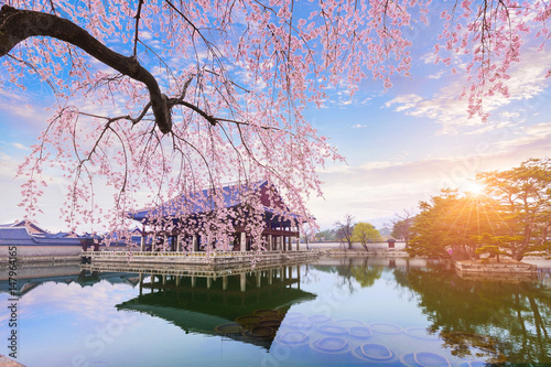 Photo  gyeongbokgung palace with cherry blossom tree in spring time in seoul city of korea, south korea
