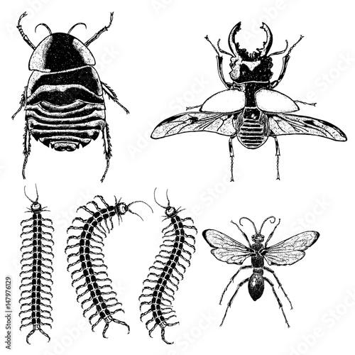 Big set of insects, bugs, flying beetles Fototapeta